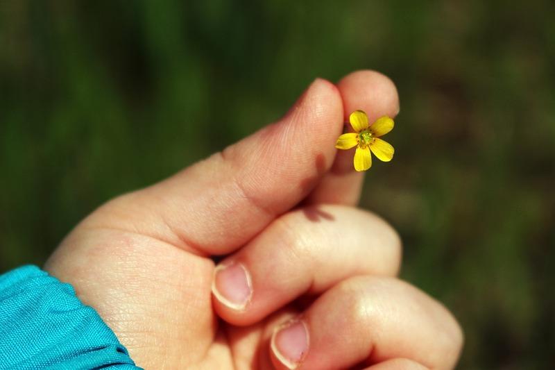 """""""цветок добра"""""""