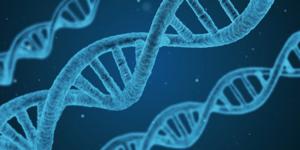 ФИПИ: Для успешной сдачи ЕГЭ по биологии необходима практика