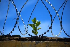 Новый ФГОС: лишение свободы на срок от 5 до 7 лет