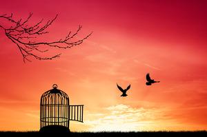 Приключения свободы