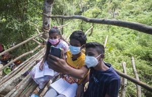 На Шри-Ланке школьники учатся на деревьях